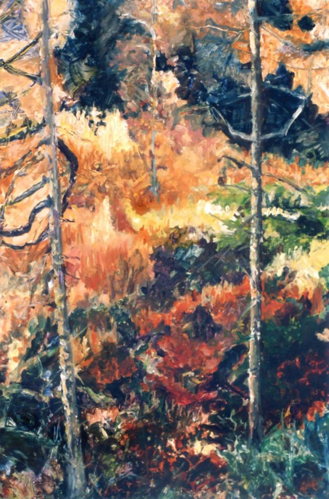 Franes Mullarky trees in forest